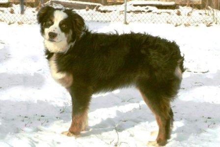 Companion And Fun Dog Shows South East
